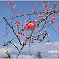 赤柯山櫻花-2019-03-128.jpg