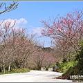赤柯山櫻花-2019-03-129.jpg