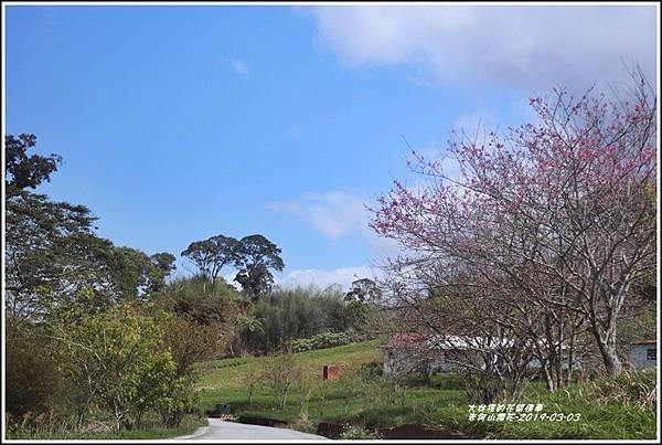 赤柯山櫻花-2019-03-139.jpg