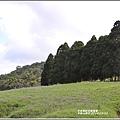 赤柯山櫻花-2019-03-141.jpg