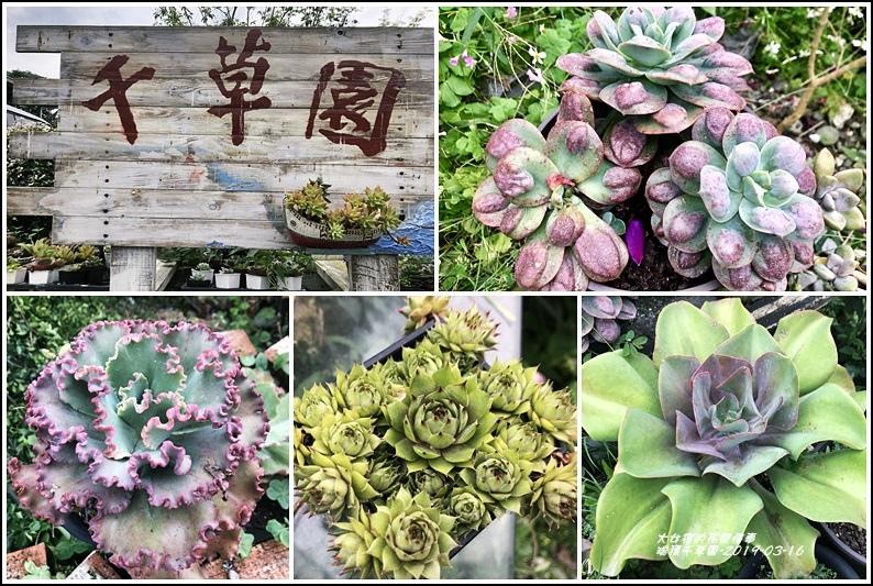 瑞穗千蘭園多肉植物-2019-03-01.jpg
