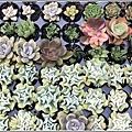 瑞穗千蘭園多肉植物-2019-03-12.jpg