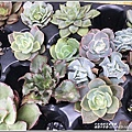 瑞穗千蘭園多肉植物-2019-03-13.jpg