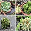 瑞穗千蘭園多肉植物-2019-03-14.jpg
