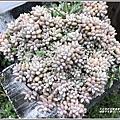 瑞穗千蘭園多肉植物-2019-03-17.jpg
