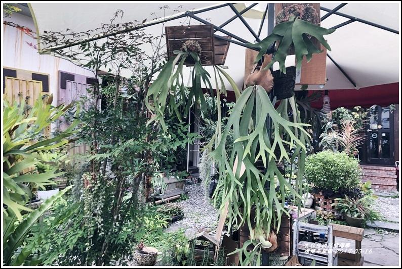 瑞穗千蘭園多肉植物-2019-03-28.jpg