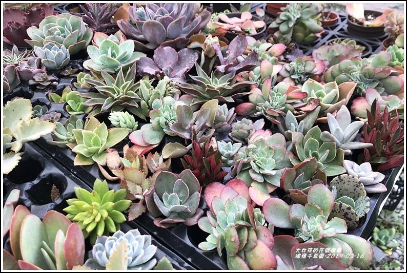 瑞穗千蘭園多肉植物-2019-03-31.jpg
