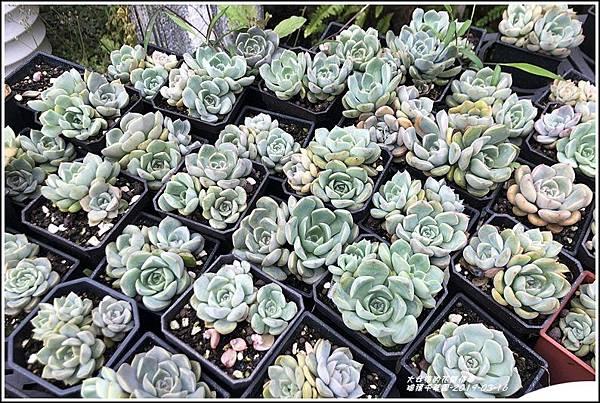 瑞穗千蘭園多肉植物-2019-03-32.jpg