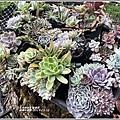 瑞穗千蘭園多肉植物-2019-03-36.jpg
