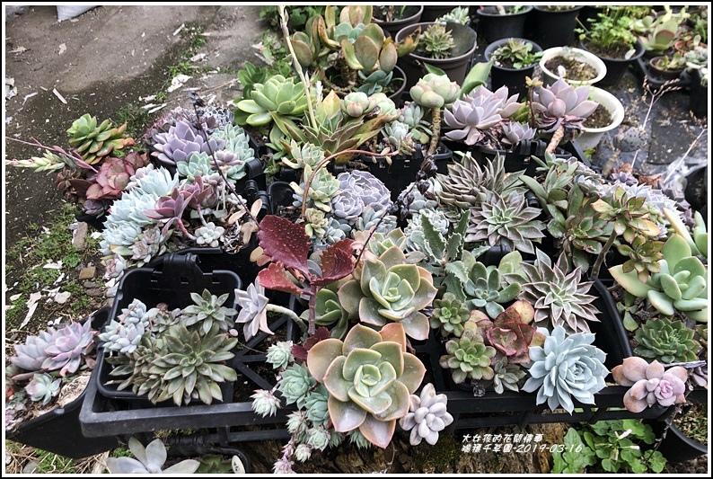 瑞穗千蘭園多肉植物-2019-03-37.jpg