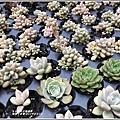 瑞穗千蘭園多肉植物-2019-03-41.jpg