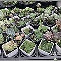 瑞穗千蘭園多肉植物-2019-03-44.jpg