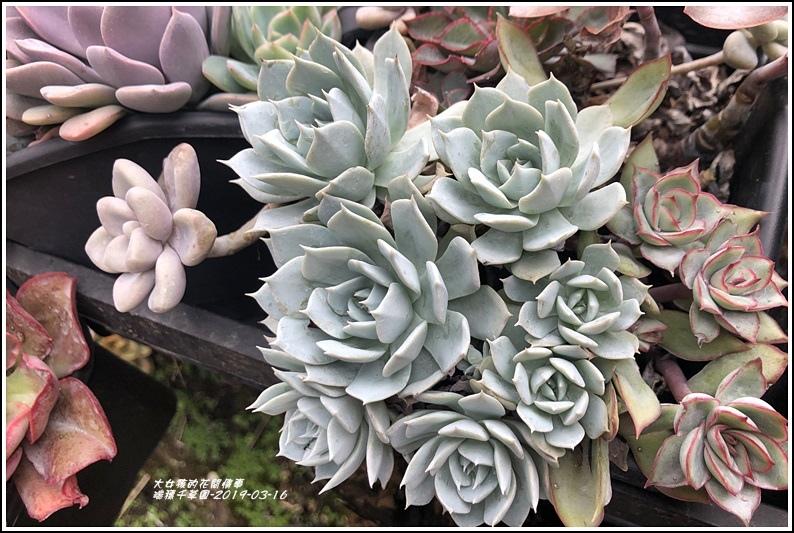 瑞穗千蘭園多肉植物-2019-03-46.jpg