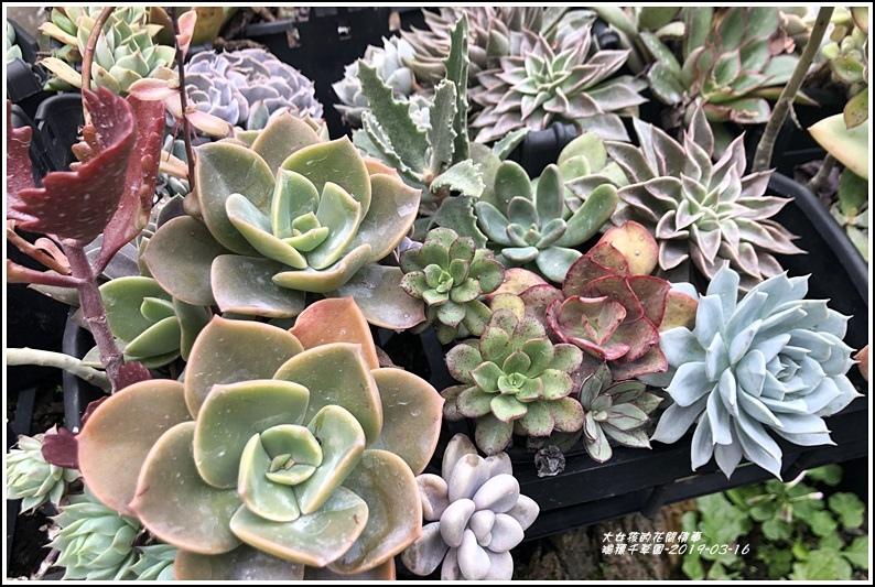 瑞穗千蘭園多肉植物-2019-03-47.jpg