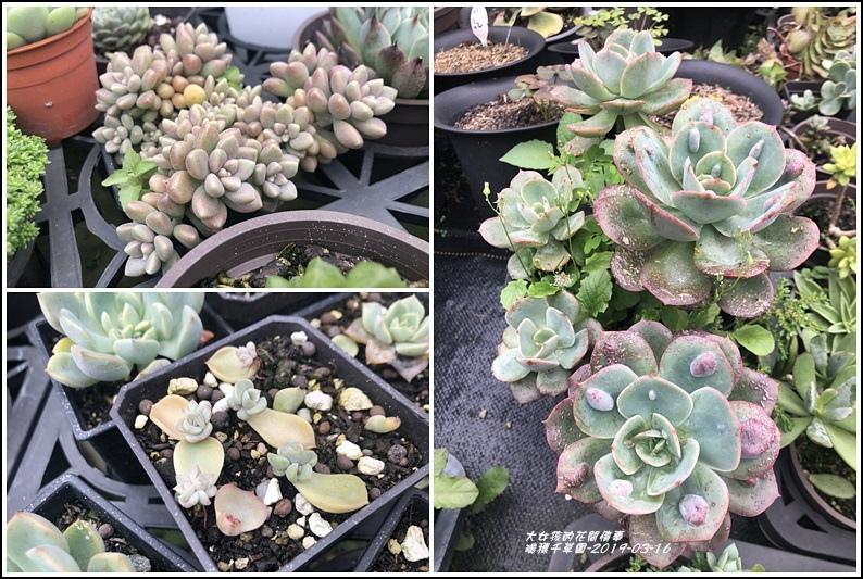 瑞穗千蘭園多肉植物-2019-03-48.jpg