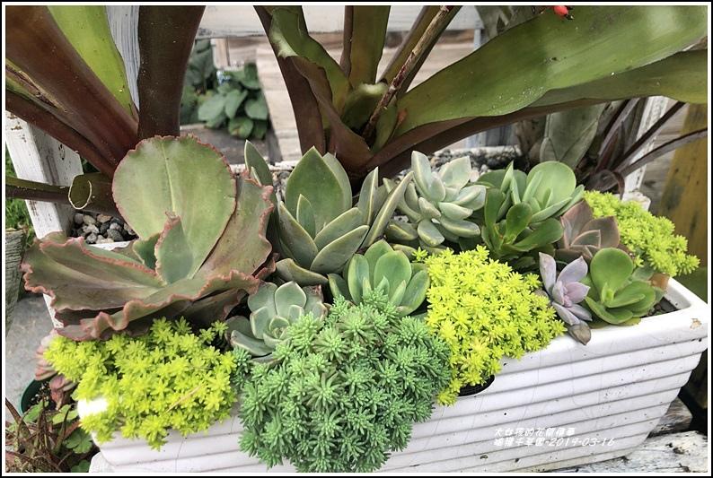 瑞穗千蘭園多肉植物-2019-03-51.jpg