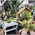 瑞穗千蘭園多肉植物-2019-03-52.jpg