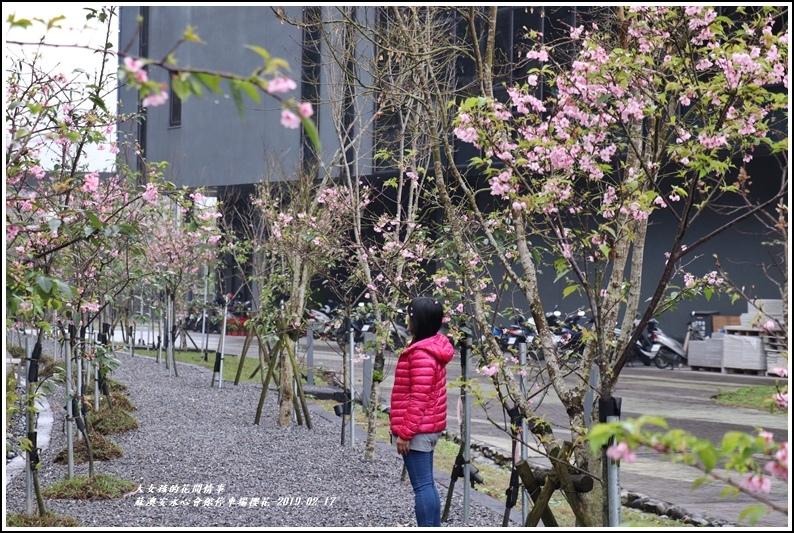 安永心會館停車場櫻花-2019-02-15.jpg