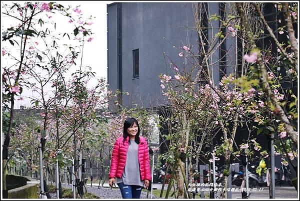 安永心會館停車場櫻花-2019-02-18.jpg
