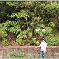 富源桐花-2019-03-13.jpg