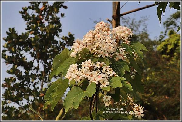 富源桐花-2019-03-23.jpg