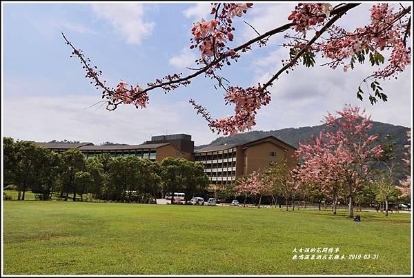 鹿鳴溫泉酒店花旗-2019-03-02.jpg