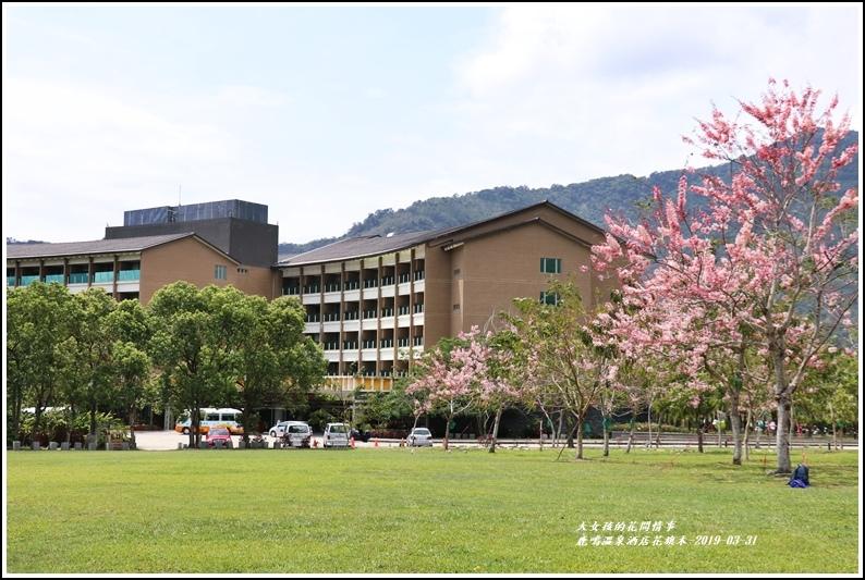 鹿鳴溫泉酒店花旗-2019-03-03.jpg