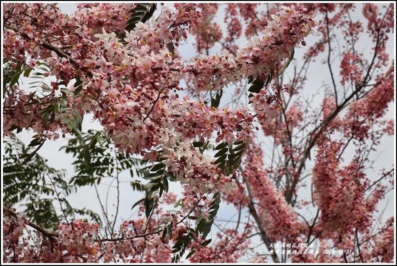 鹿鳴溫泉酒店花旗-2019-03-23.jpg