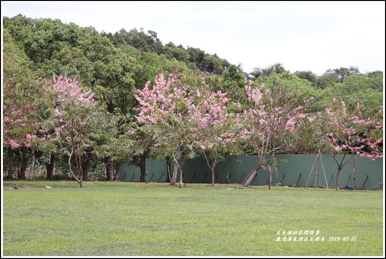 鹿鳴溫泉酒店花旗-2019-03-24.jpg
