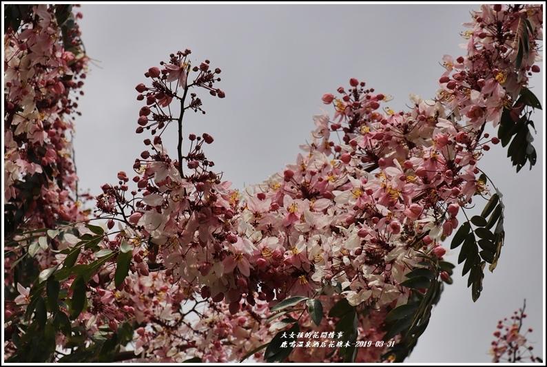 鹿鳴溫泉酒店花旗-2019-03-25.jpg