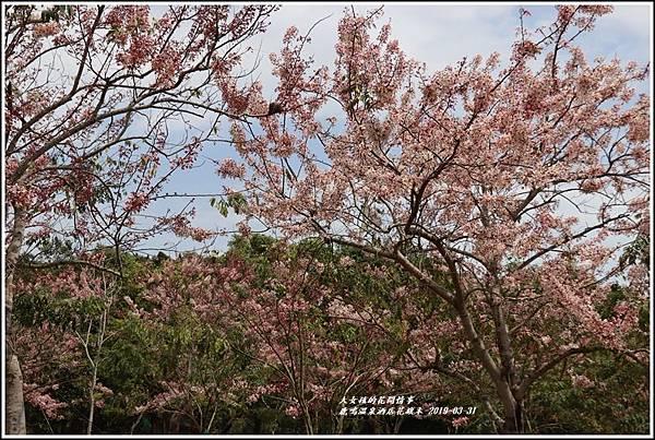 鹿鳴溫泉酒店花旗-2019-03-28.jpg
