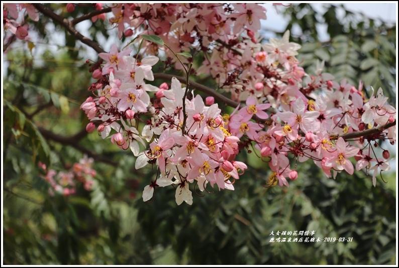 鹿鳴溫泉酒店花旗-2019-03-32.jpg