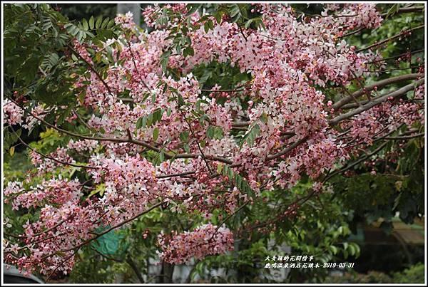 鹿鳴溫泉酒店花旗-2019-03-47.jpg