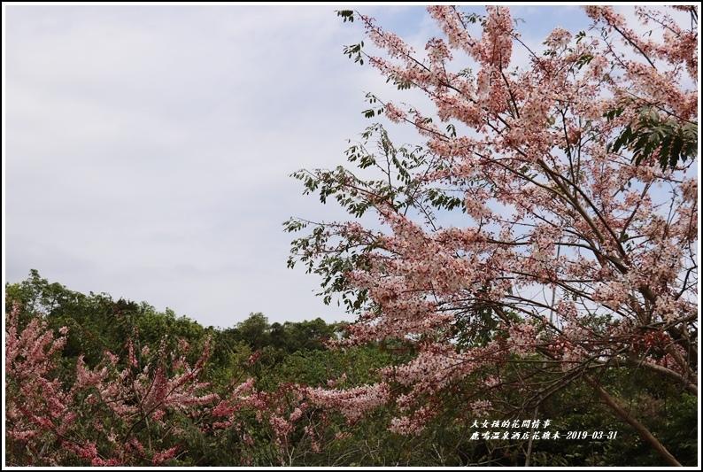 鹿鳴溫泉酒店花旗-2019-03-54.jpg