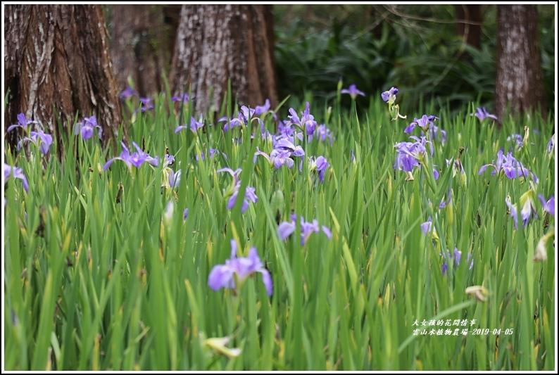 雲山水植物農場-2019-04-23.jpg