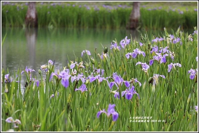 雲山水植物農場-2019-04-26.jpg