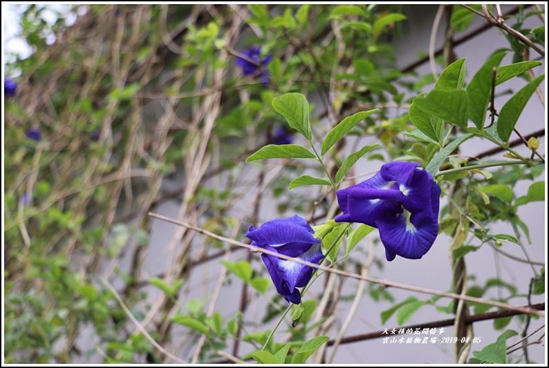 雲山水植物農場-2019-04-39.jpg