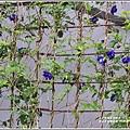雲山水植物農場-2019-04-40.jpg
