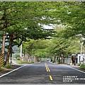 花蓮193春日小葉欖仁隧道-2019-03-01.jpg