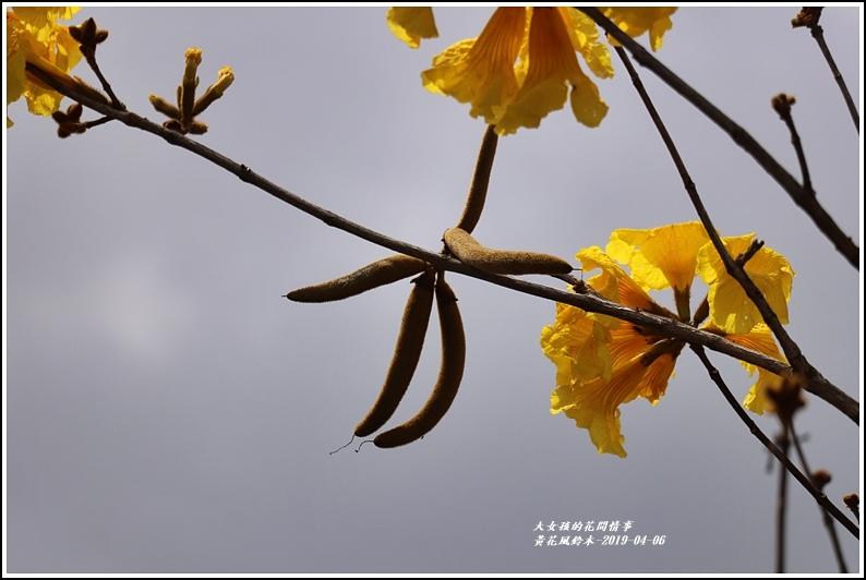 瑞北台9線黃花風鈴木-2019-04-006.jpg