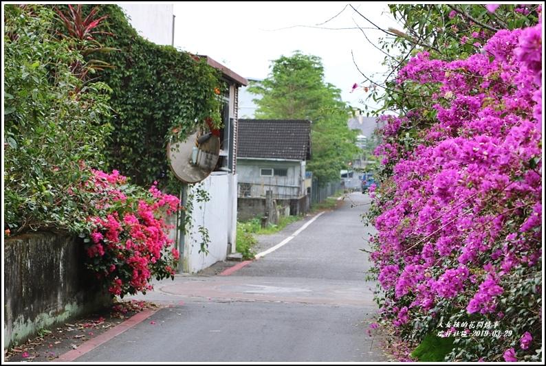 瑞祥社區街景(九重葛)-2019-03-04.jpg