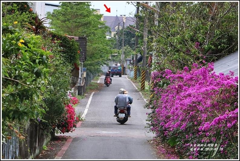 瑞祥社區街景(九重葛)-2019-03-05.jpg
