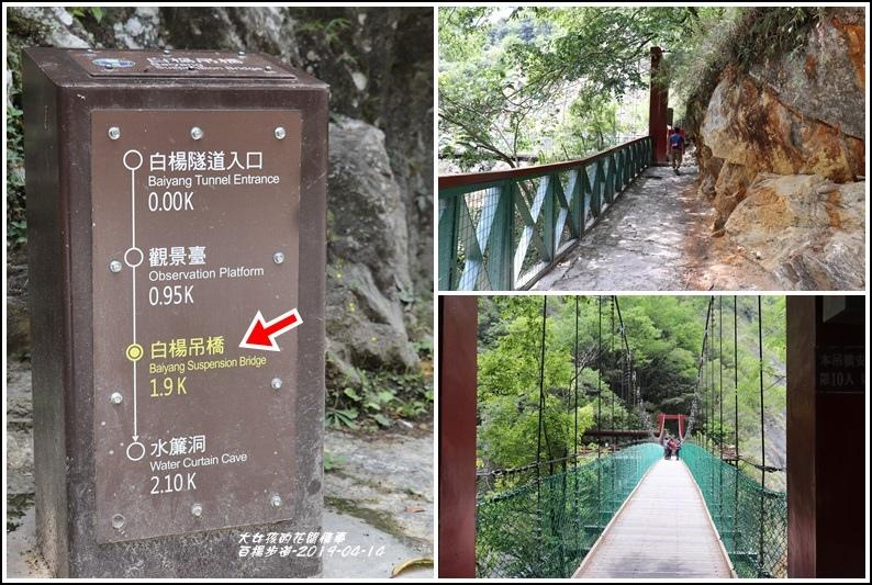 白楊步道(白楊吊橋)-2019-04-01.jpg