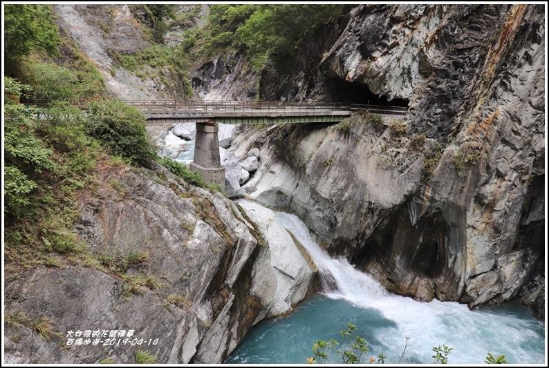 白楊步道(白楊吊橋)-2019-04-09.jpg