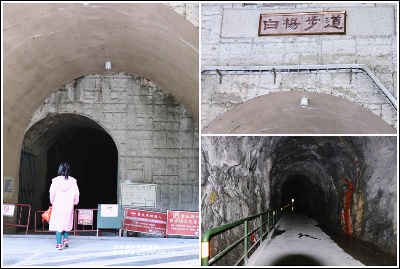 白楊步道-2019-04-07.jpg