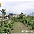 十六股大道蜀葵花田-2019-04-05.jpg