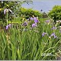 嘉德萱草園-2019-04-11.jpg