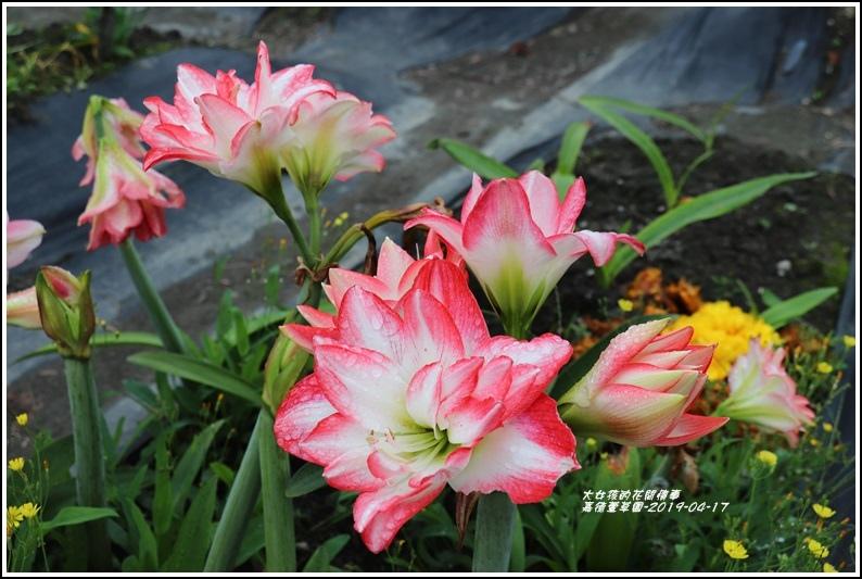 嘉德萱草園-2019-04-14.jpg