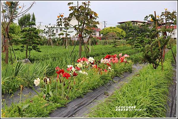 嘉德萱草園-2019-04-24.jpg