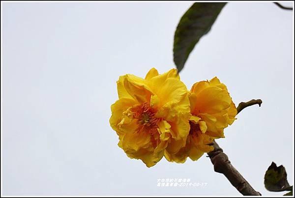 嘉德萱草園-2019-04-34.jpg